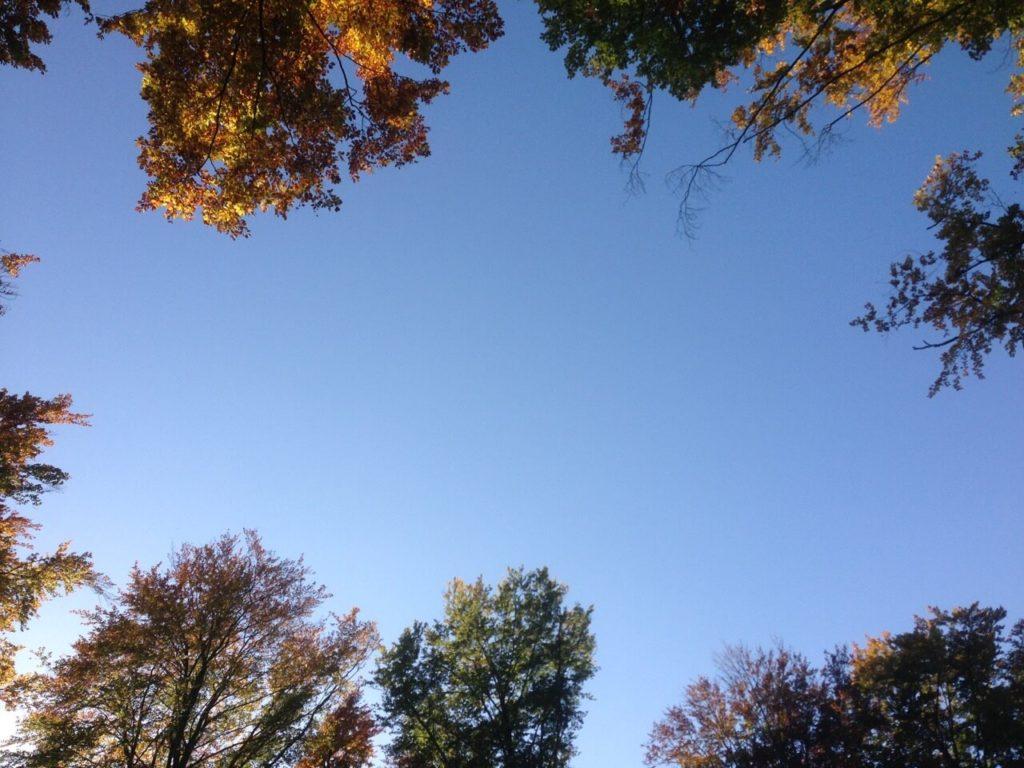 Bäume ragen in den Himmel